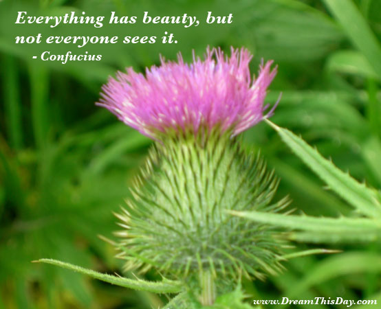 famous quotes about beauty. Everything has eauty, but not